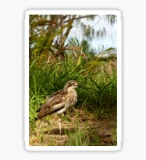 Bush Stone-curlew Sticker