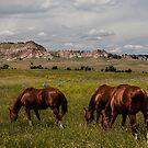 Grazing the Northern Cheyenne by Ken McElroy