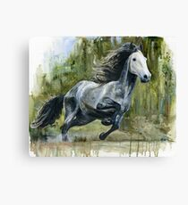 Running Andalusian Horse Canvas Print