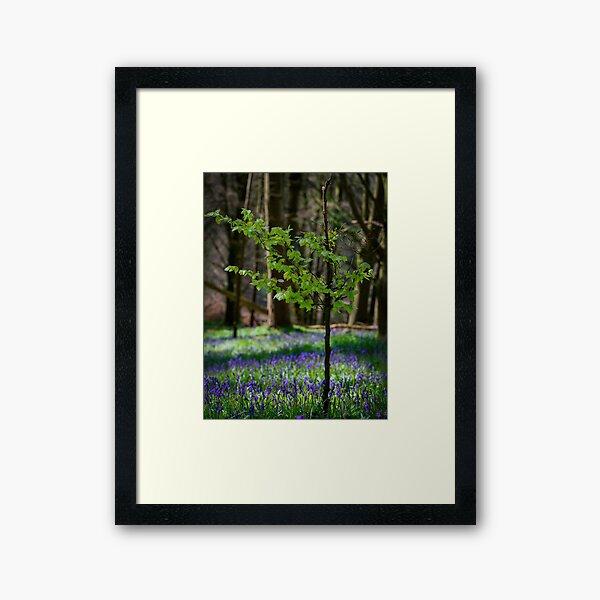 Lough Muckno Bluebell Forest Framed Art Print
