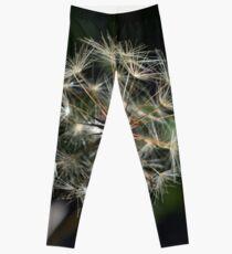 Dandelion it up Leggings