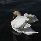 Beautiful Swan by Marie Van Schie