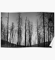After The 2000 Cerro Grande Fire Los Alamos Poster