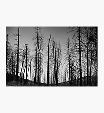 After The 2000 Cerro Grande Fire Los Alamos Photographic Print