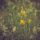 Wildflower by j.p. Howley