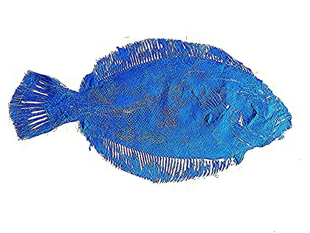 Gyotaku fish rubbing, Florida Flounder,Surreal Blue by alan barbour
