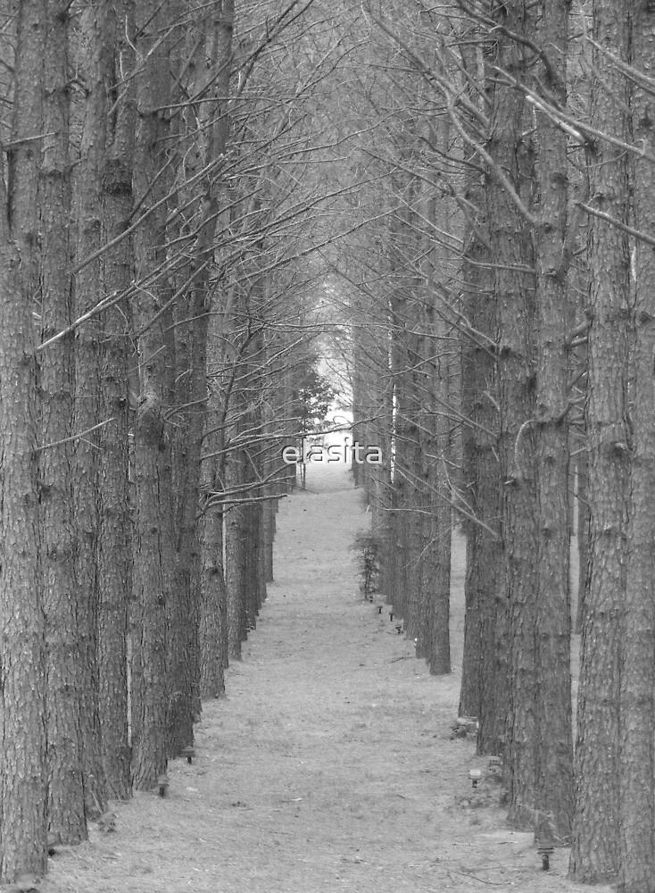 Pine Path BW by elasita