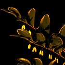 Flowers in the Night by elasita