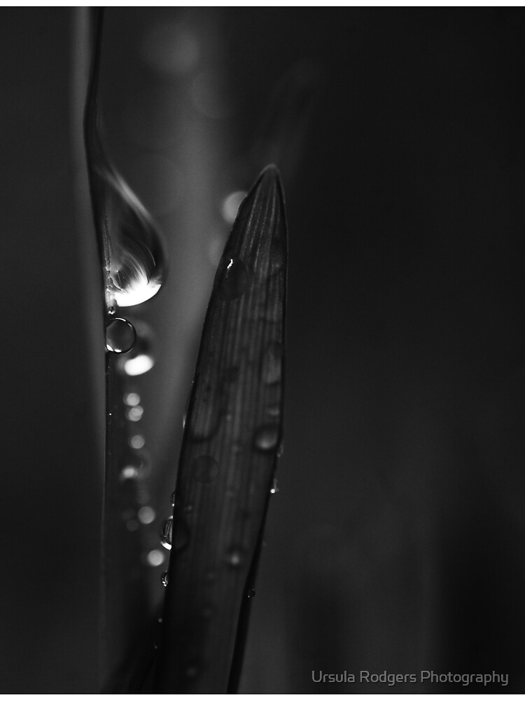 Tears by URphotography