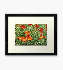 Mexican Asters Framed Print