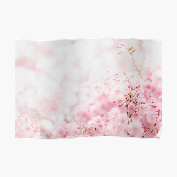 Sakura — さくら Poster