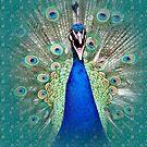 Peacock Splendor by Delights
