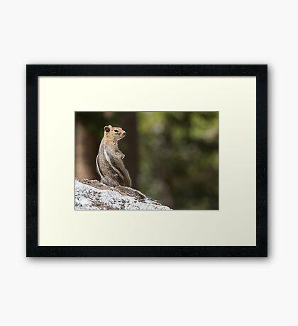 Squirrel stripes Framed Print
