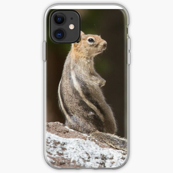 Squirrel stripes iPhone Soft Case