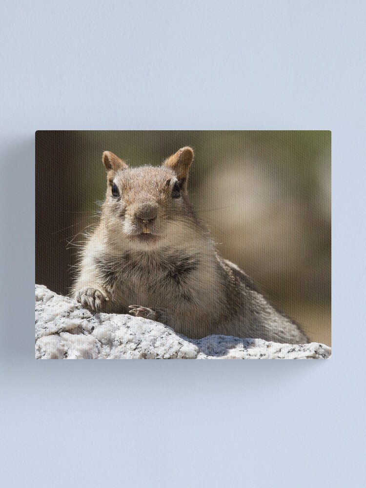 Alternate view of Face the squirrel Canvas Print