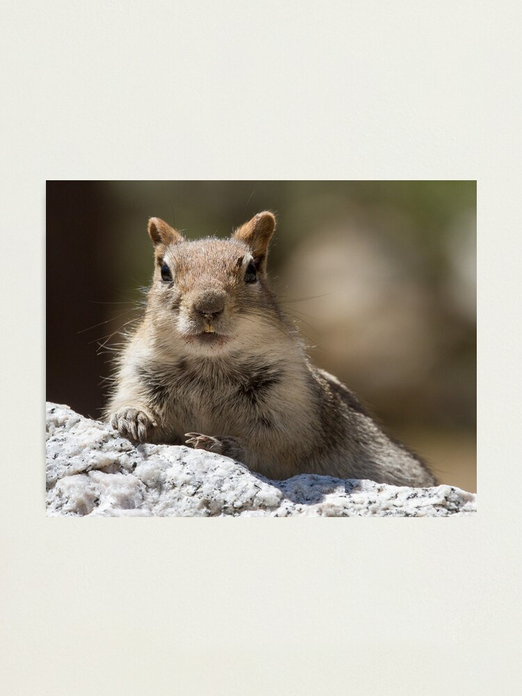 Alternate view of Face the squirrel Photographic Print