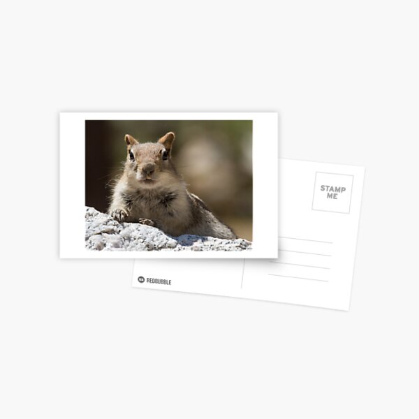 Face the squirrel Postcard