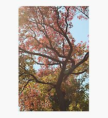 Fall Tree Photographic Print