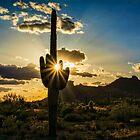 Desert Glory  by Saija  Lehtonen