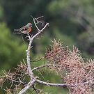Scarlet in the branches by Adam Le Good