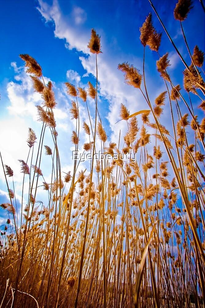 Pampas Grass  by Eyecbeauty