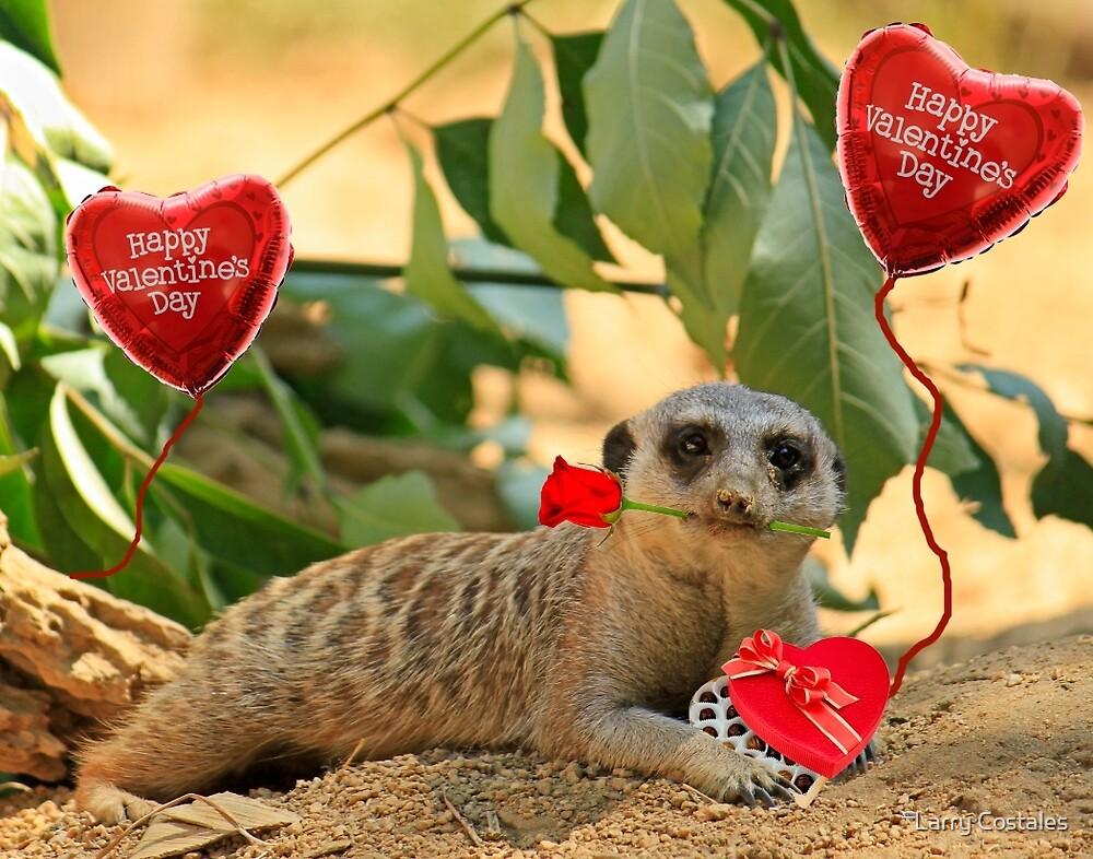 Sexy Meerkat Valentine by Larry Costales
