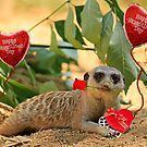 Sexy Meerkat Valentine by Larry Costales