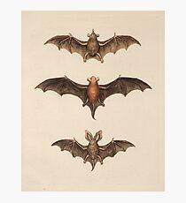 Bats Photographic Print