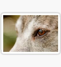 Mustang Eye- Animal Collection  Sticker