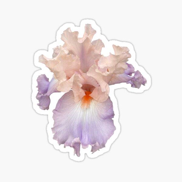 Grandma's Iris Sticker