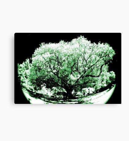 big old tree IR Canvas Print