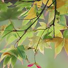 Patterned leaves by Jenny Hall