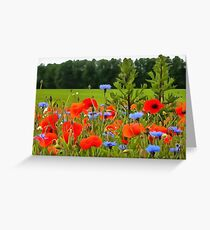 Poppies And Cornflowers Greeting Card