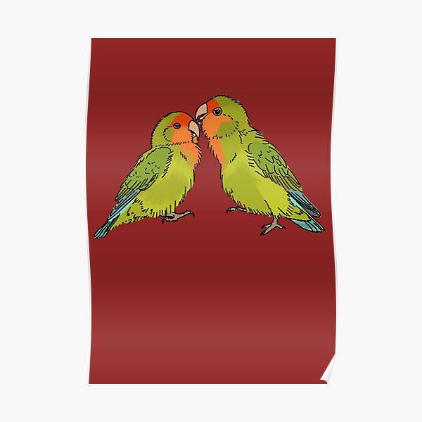 Lovebird lea Lovebird
