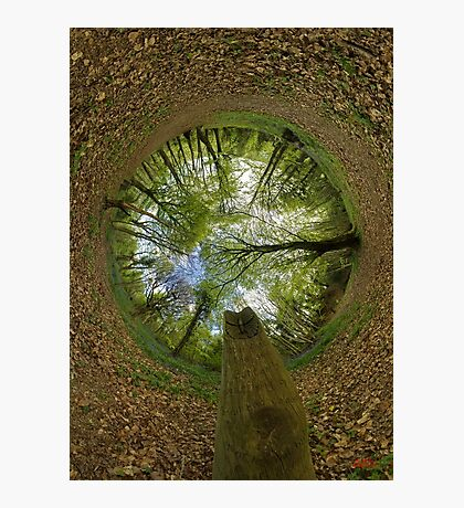 Butterfly Sculpture in Prehen Woods, Derry (Sky-in) Photographic Print