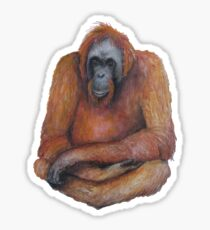 Wild Orangutan Drawing Sticker