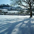 Walnut Tree in the Snow by Tom Carswell