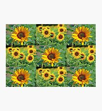 Sunflowers on a Field Photographic Print