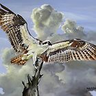 Majestic Sea Hawk by Phyllis Beiser