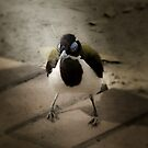Blue Faced Honey Eater by JuliaKHarwood