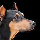 Profile of a doberman by jozi1