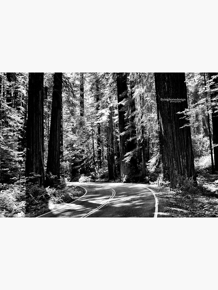 Avenue of the Giants - monochrome by designfly