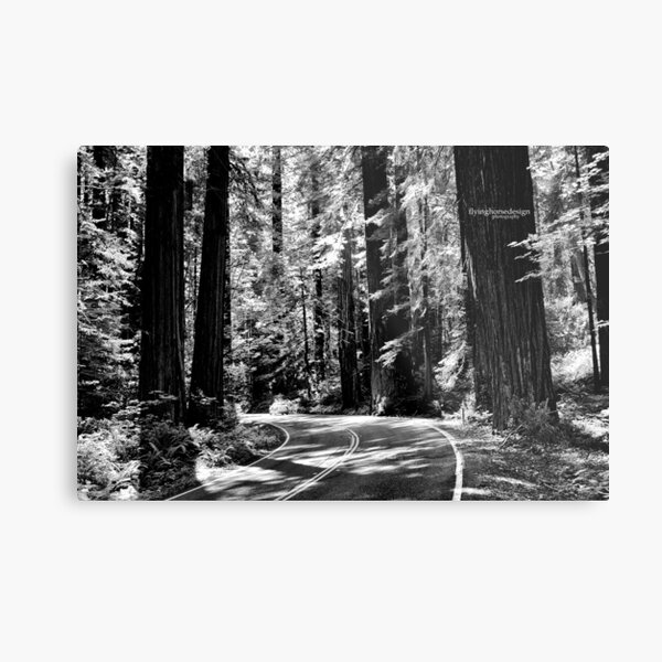 Avenue of the Giants - monochrome Metal Print