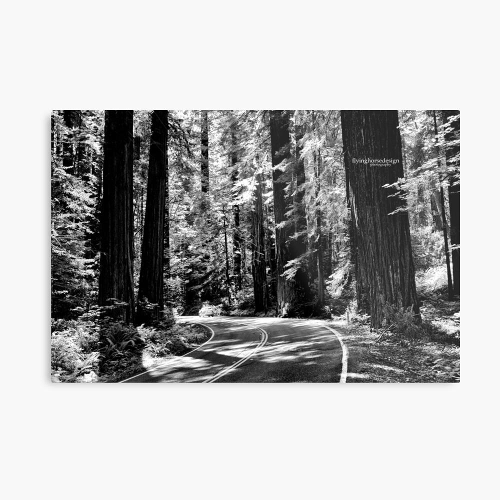 Avenue of the Giants - monochrome Metal Print