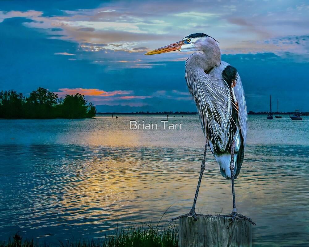 An Early Bird by Brian Tarr