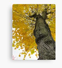 Tall Tree Yellow (2) Canvas Print