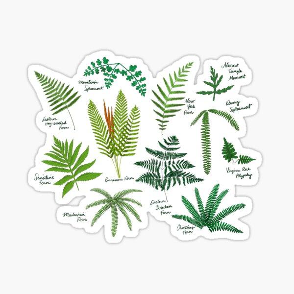 Fresh Adirondack Ferns (Light) Sticker