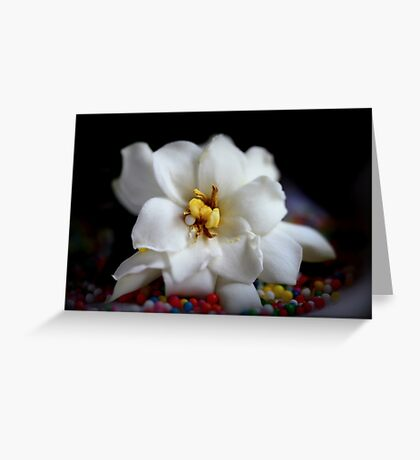 Jasmin - Still Life Greeting Card