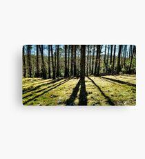Forest Shadows Canvas Print