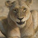 Lioness by Erik Schlogl